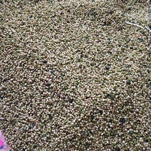 安徽省池州市貴池區黃精種子 黃精干種子