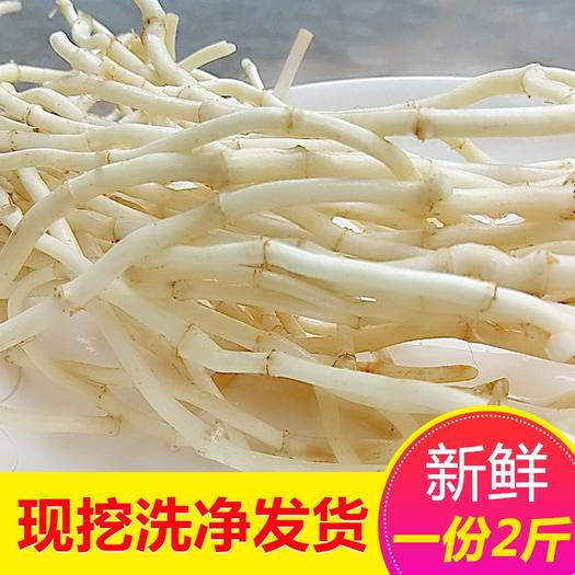 陜西省寶雞市渭濱區 農家直供現挖野生魚腥草折耳根1件包郵