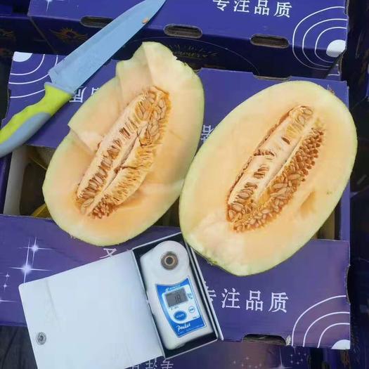 山東省聊城市莘縣網紋瓜 3斤以上