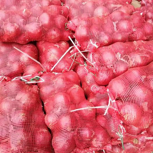 河南省開封市通許縣 二紅洋蔥可按貨主出口標準供應3-5cm5-7cm8-0以上