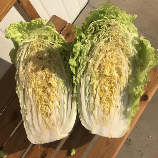 山東省淄博市桓臺縣義和秋 3~6斤 凈菜