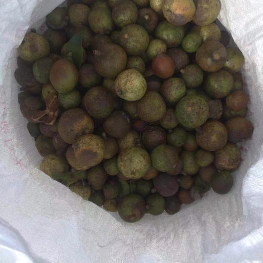 廣東省梅州市五華縣小茶籽