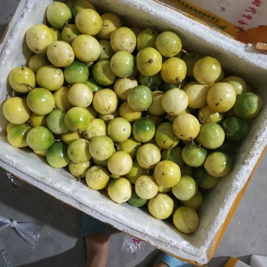 福建省泉州市南安市 福建黃金百香果5斤裝