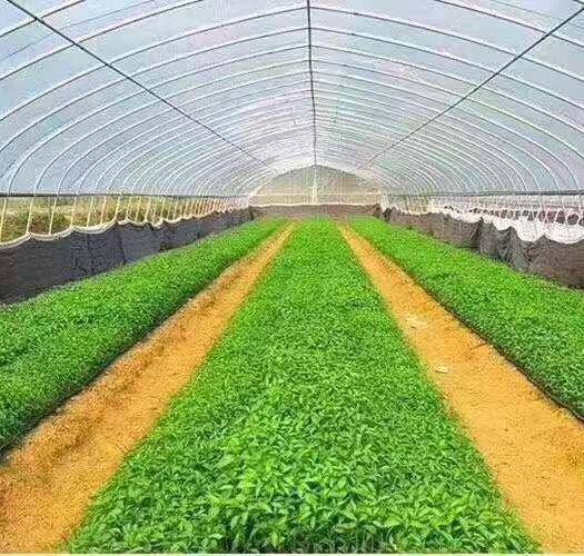 廣東省廣州市番禺區 廠家直銷、種植大棚、養殖大棚