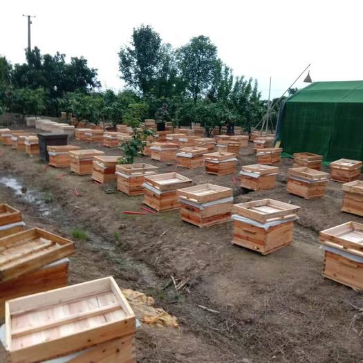 四川省德陽市綿竹市中華蜜蜂 優質中蜂批發出售