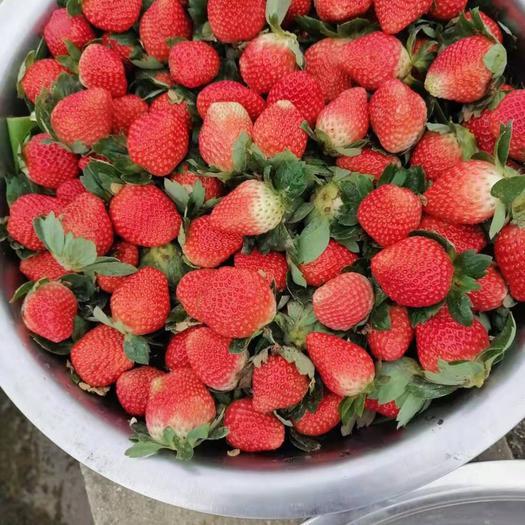 四川省成都市武侯區 草莓