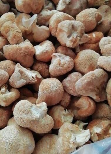 福建省寧德市蕉城區 5公分以下猴頭菇干貨品質好