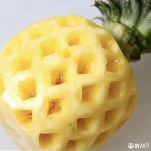 廣東省湛江市徐聞縣 金菠蘿