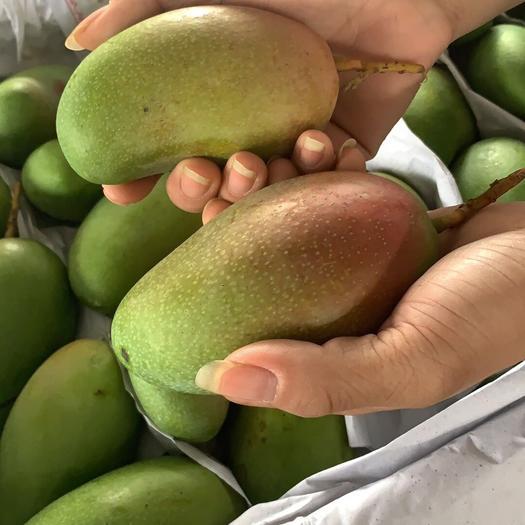 江西省贛州市崇義縣 新鮮水果越南進口甜心芒,一件代發