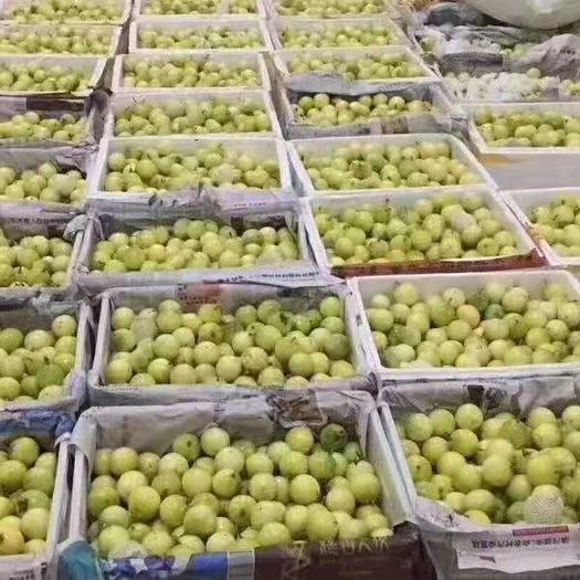 福建省泉州市南安市 黃金百香果供應平臺一件代發3斤裝5斤裝