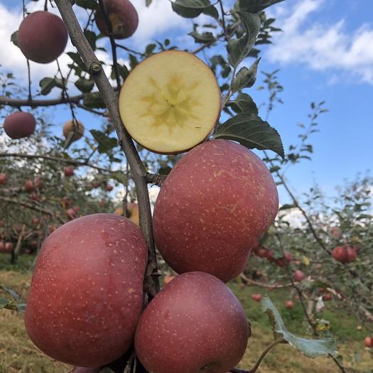 四川省眉山市丹棱縣 北緯30度離太陽最近的蘋果