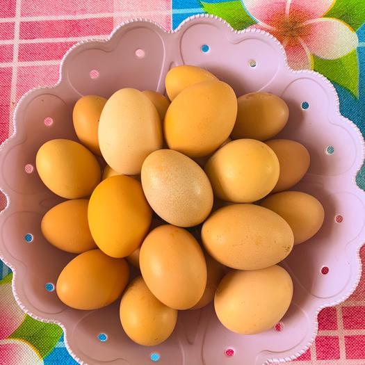 遼寧省鞍山市岫巖滿族自治縣 農家散養土雞蛋