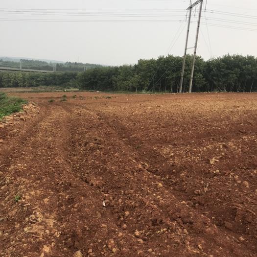 海南省澄邁縣澄邁縣有林地 300畝紅土地整體出租,也可以分割出租,一起合作都可以