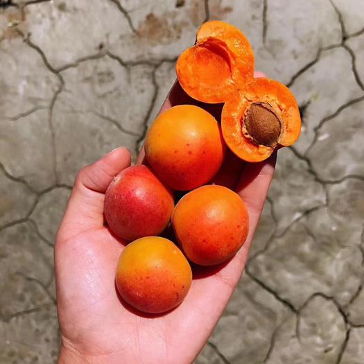 新疆維吾爾自治區阿克蘇地區阿克蘇市 出售吊干杏20噸