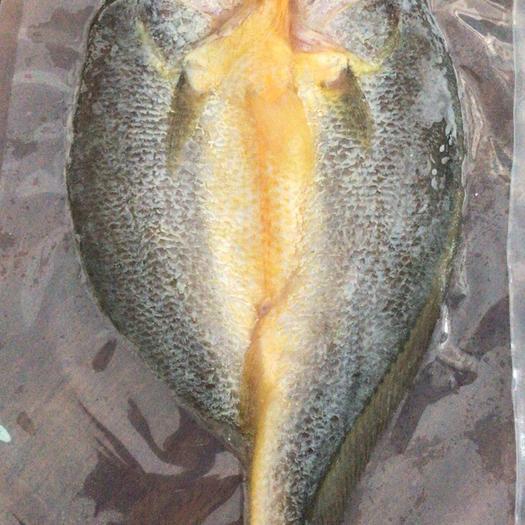 福建省寧德市蕉城區大黃魚 野生 0.5公斤以下