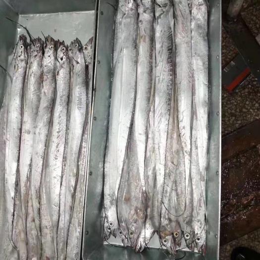 上海市普陀區 刀魚帶魚,價格美麗,大量供應