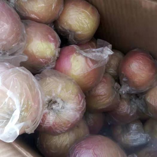 河北省石家莊市辛集市 膜袋紅富士蘋果個大脆甜。