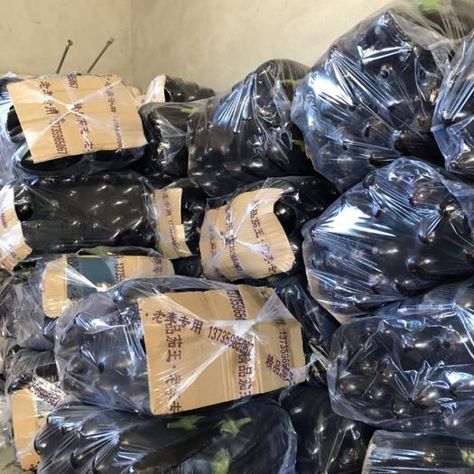遼寧省葫蘆島市綏中縣765長茄 精品765二茄。新鮮貨源。價格0.55,有需要的朋友聯系我