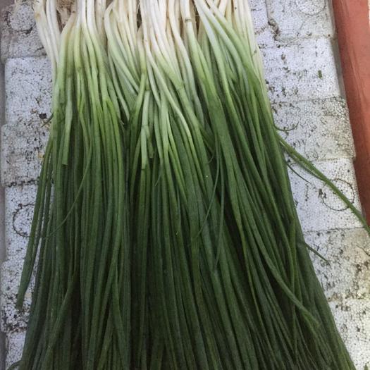 北京市豐臺區 香蔥香芹