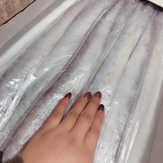 遼寧省沈陽市沈河區舟山帶魚 7/9上下一樣的魚,皮毛超級好