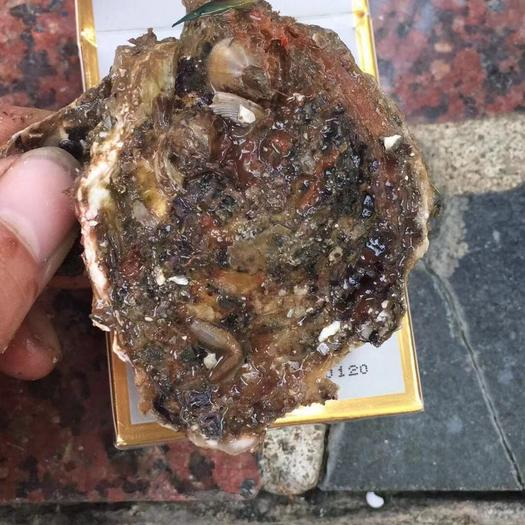 廣東省潮州市饒平縣 野生牡蠣