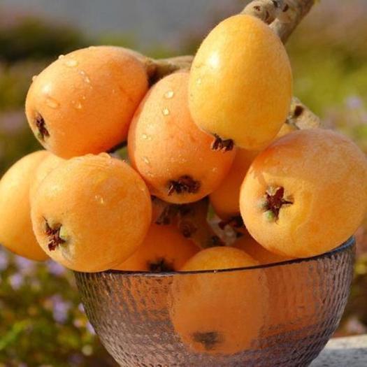 云南省红河哈尼族彝族自治州蒙自市 蒙自长虹枇杷,纯甜,多汁,支持一件代发