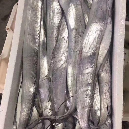 江蘇省連云港市贛榆區野生帶魚 自家漁船打撈,當天發貨