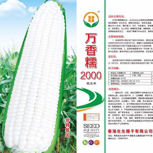 云南省昆明市官渡區 白糯玉米種子,萬香糯2000   口感型,保鮮久,耐運輸