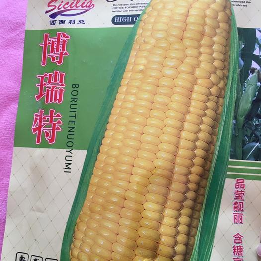 河南省鄭州市二七區 水果玉米種子