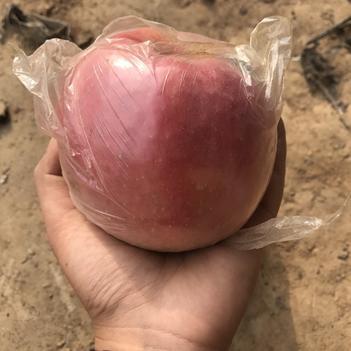 红富士苹果 70-80mm 片红 万亩果园 大量供应