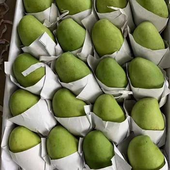 越南进口玉芒大量批发