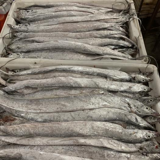 河南省焦作市溫縣舟山帶魚 野生 0.5公斤以下