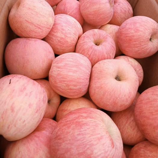 陜西省延安市黃陵縣洛川蘋果 80mm以上 條紅 紙+膜袋