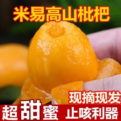 四川省攀枝花市米易县 攀枝花米易枇杷当季应季水果现摘现发个大细腻皮薄多汁5斤包邮