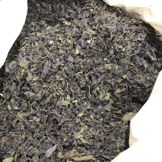 安徽省亳州市譙城區 新鮮正宗紫蘇葉泡茶燒魚
