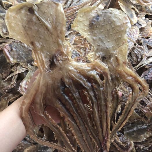 廣東省陽江市江城區 淡干足干章魚干八爪魚干,下奶神器,養氣補血,小孩止虛汗佳品