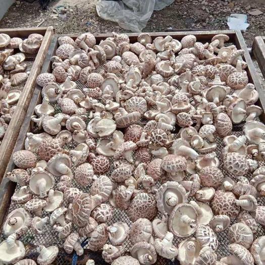湖北省隨州市隨縣原木干香菇 干香菇 4cm~6cm
