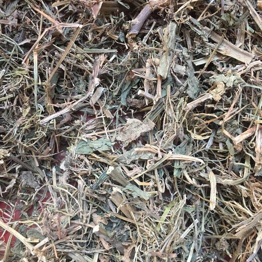廣西壯族自治區玉林市玉州區 野油菜  全干無硫正品保證