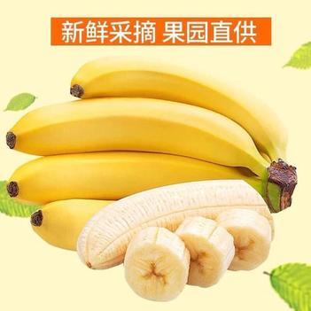 【特价包邮】香蕉 海南香蕉 小米蕉 金芭蕉 皇帝蕉 批发