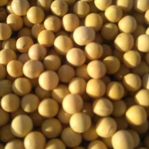黑龙江省牡丹江市绥芬河市黄大豆 7.0大颗粒