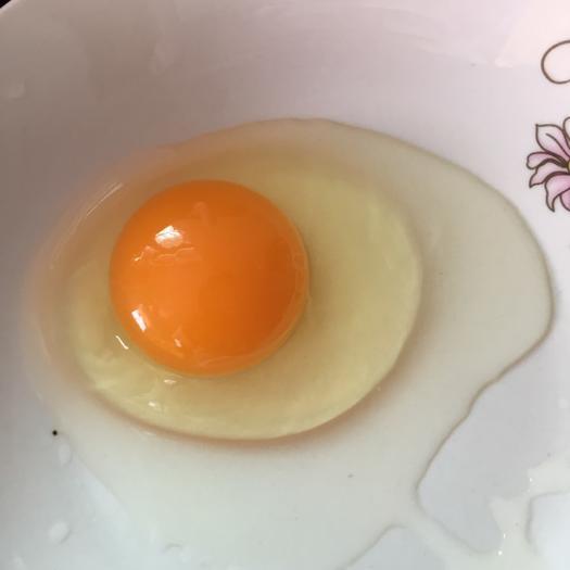 福建省南平市建陽區 土雞蛋 食用 50g以下
