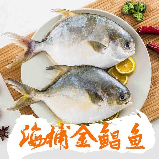 福建省福州市倉山區凍金鯧魚 速凍新鮮金鯧魚4條海鮮凍品 單條300-400g 水產海捕生