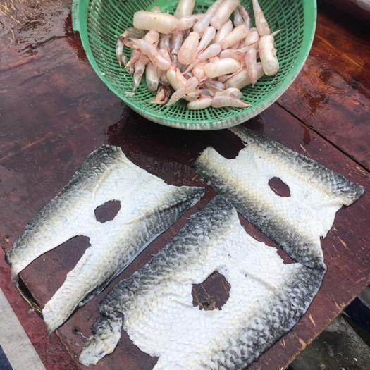 廣東省江門市新會區冰鮮魚皮