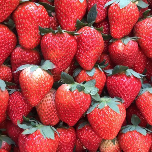 安徽省合肥市長豐縣 長豐草莓,要草莓請詳聊