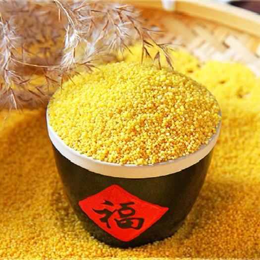 河北省张家口市万全区 小米黄小米今年新货粗粮小米24小时内发货包邮