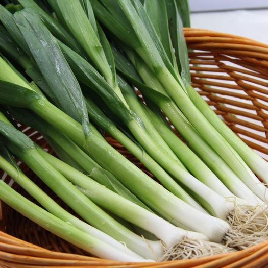 山東省臨沂市沂南縣 過倆月出售自己家里種植的蒜苗