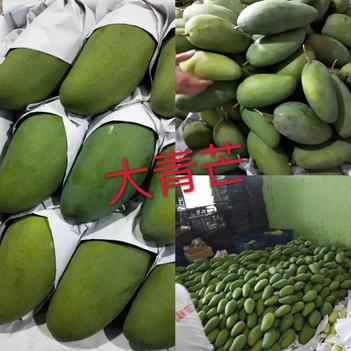越南芒果 大青芒 保質保量 產地直供  批發不零售 不包郵