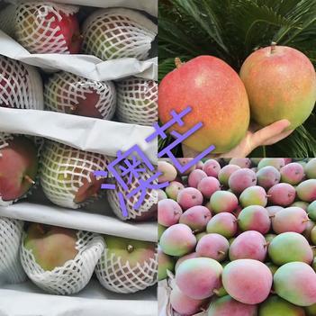越南芒果芽莊澳芒產地直供質量保證不零售
