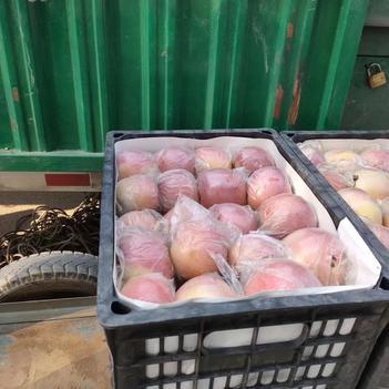 優質紅富士蘋果,大量供貨