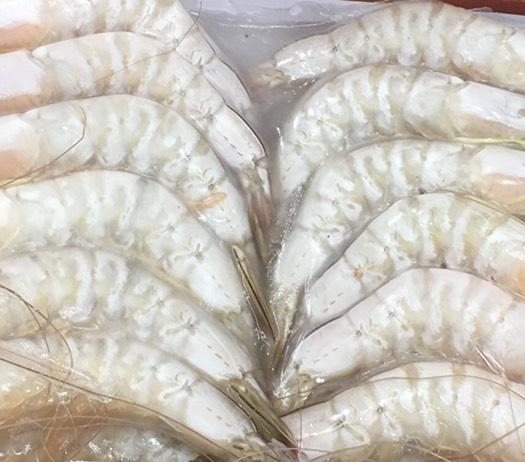 廣東省湛江市霞山區 活凍硇洲天然大明蝦16-18頭,一盒1.5斤